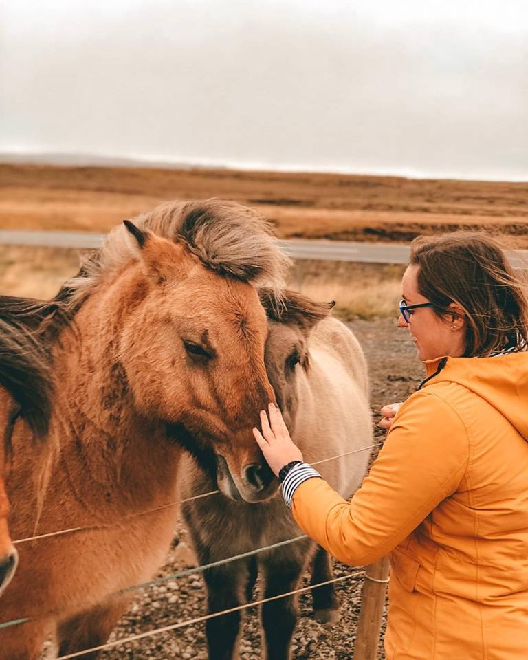 A girl in yellow jacket stroking some of Iceland's horses.