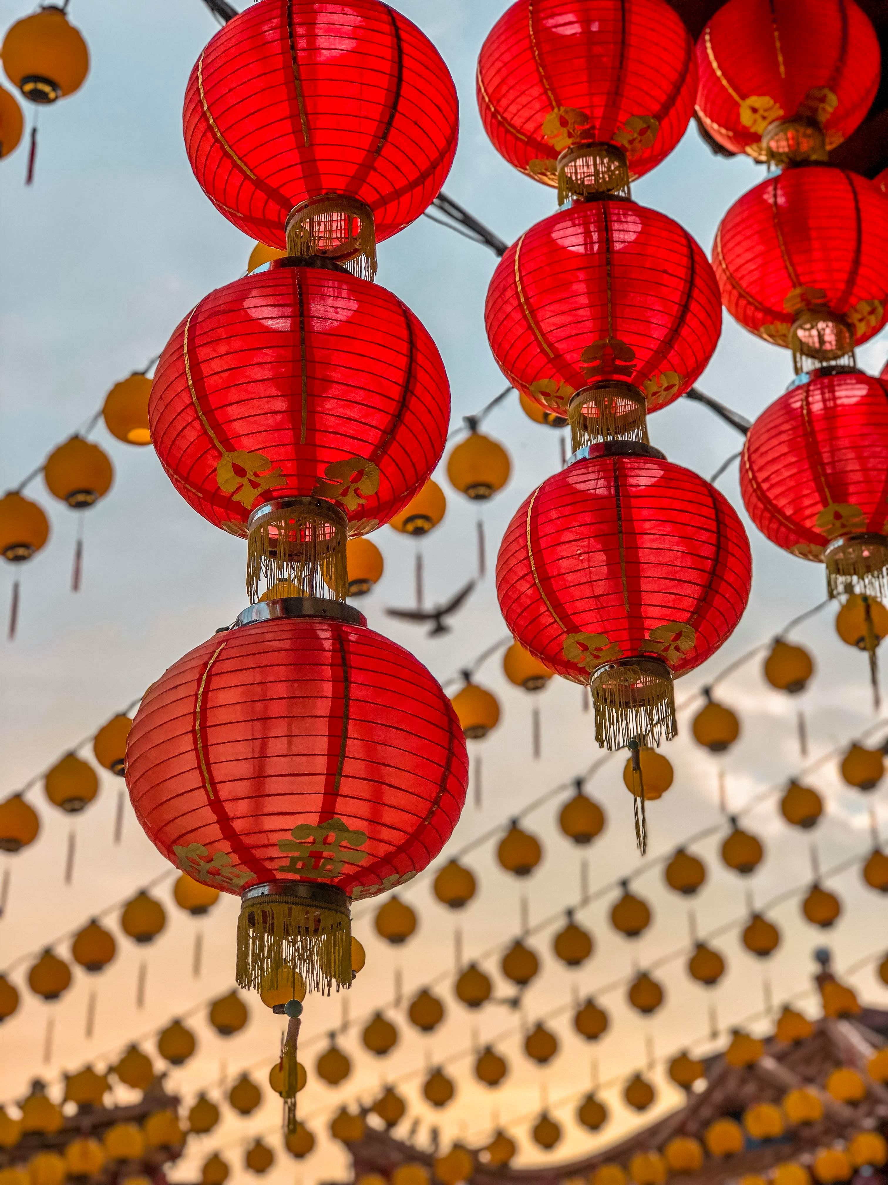 A bird in flight in between red chinese lanterns