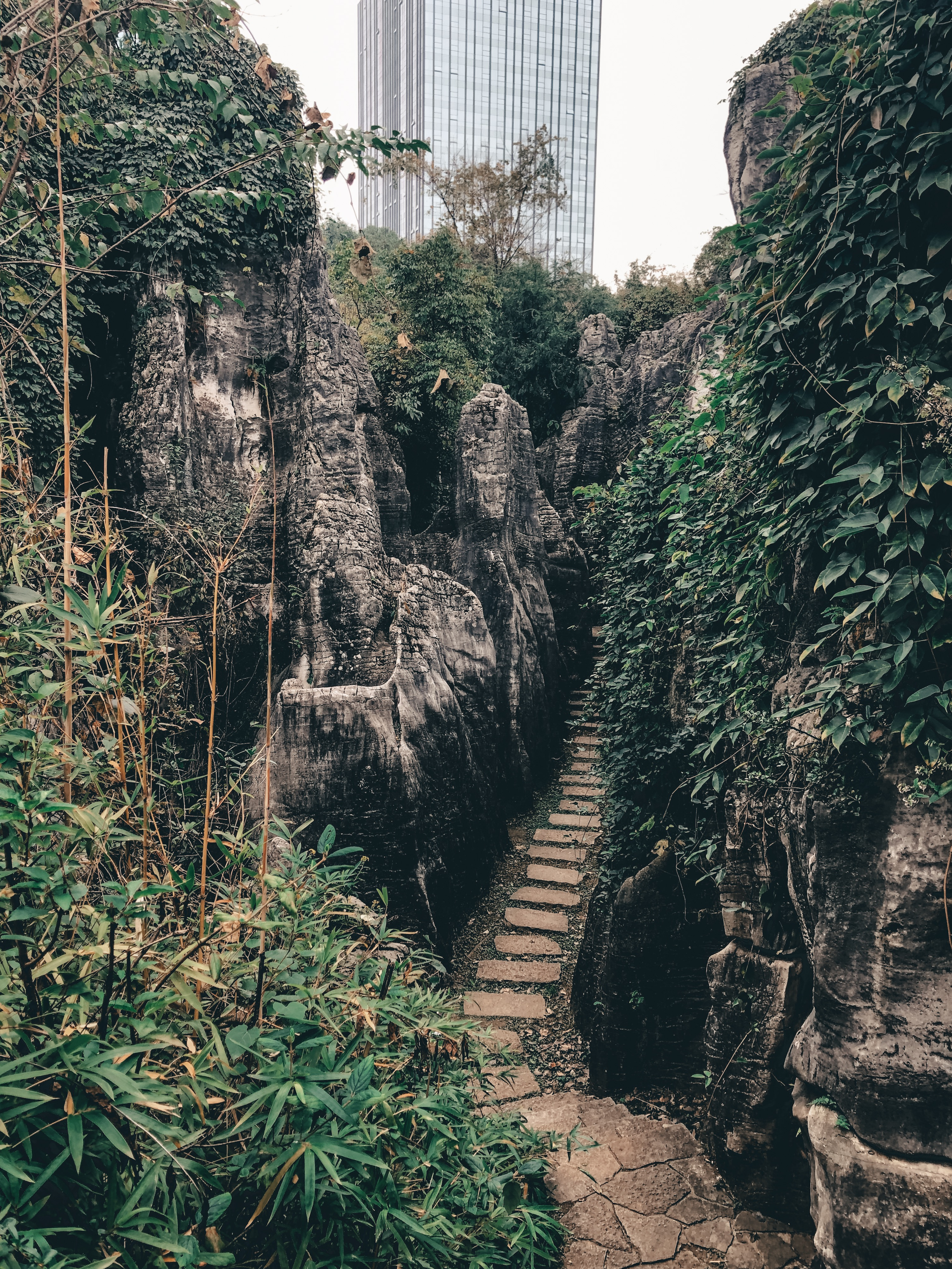 A path marked out in the mix of foliage and karst rock